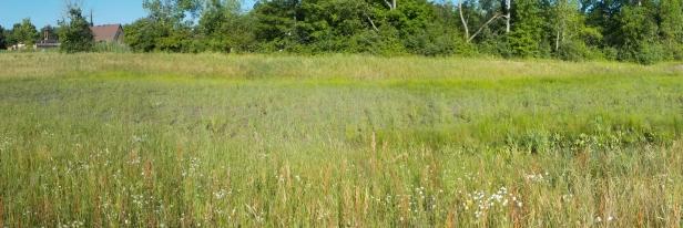 wetland_Panorama1